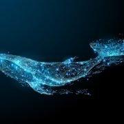 ارائه سرویس اطلاعرسانی حرکات وال ها در دنیای ارزهای دیجیتال